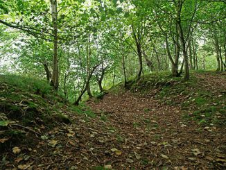 Gillies Hill