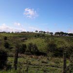 Torbrex Farm