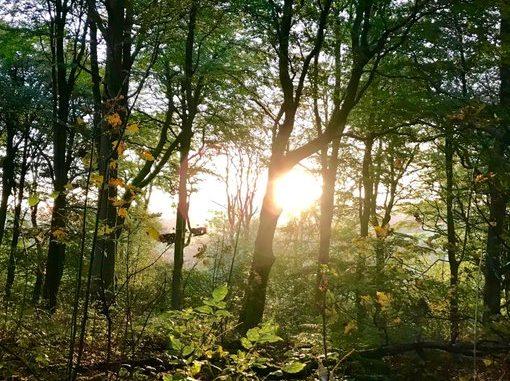 Outlander Forest
